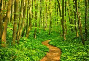 Adol-Path